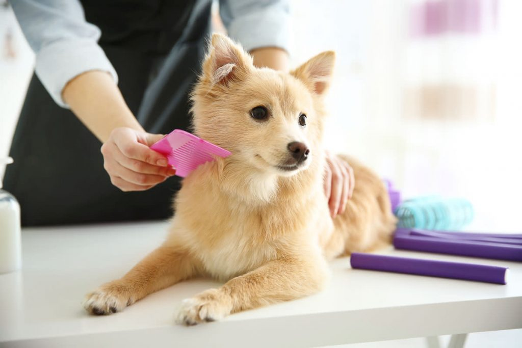 mobile dog grooming boca raton