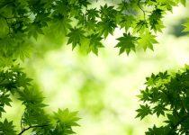 maximize plant health on landscapes