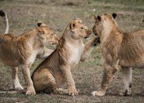 Best Safari Experience